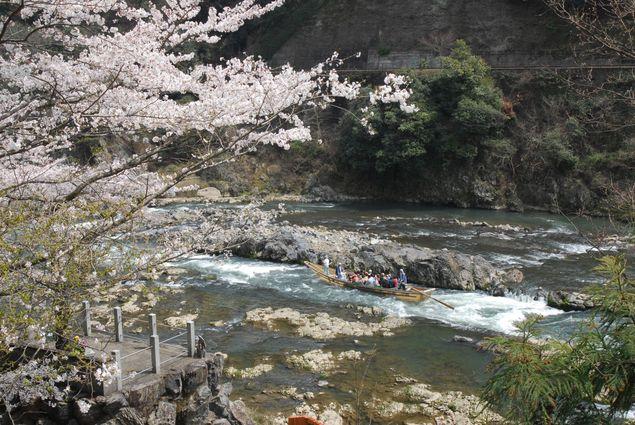 桜の名所保津峡