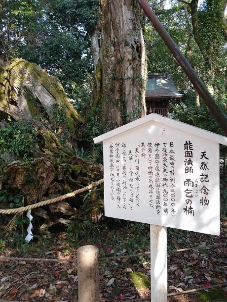 大山神社の神木