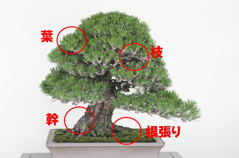 盆栽観賞ポイント